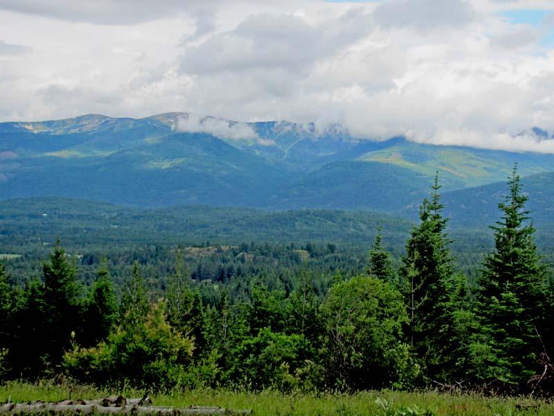 IdahoForest_MadelineDavid