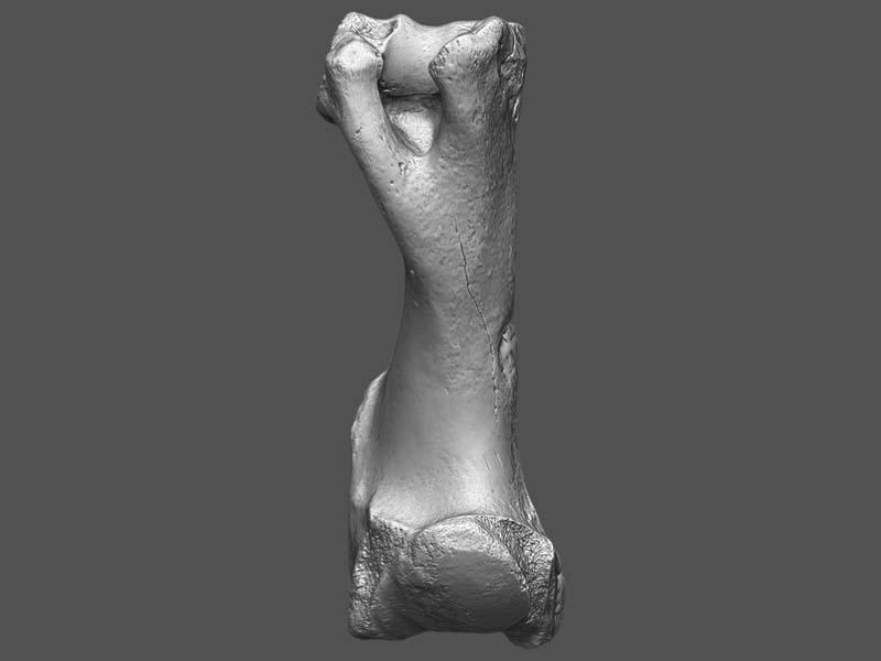imnh-47001-16957-humerus