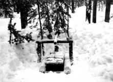 wolverine-trap