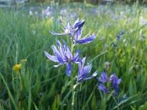 june-flowers-2013-alices-pics-136