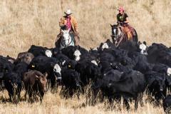 autumn-lundquist-cattle-drive-2
