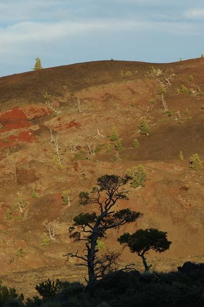 treesill
