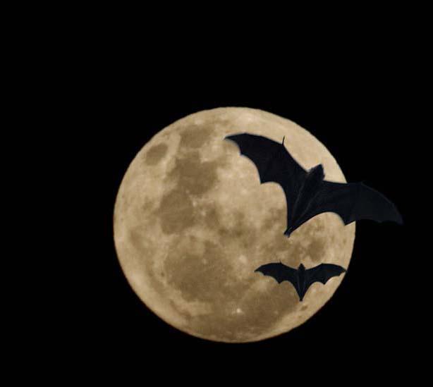 full moon and bats