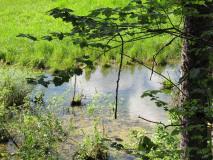pinehurst-quiet-moment-along-the-bike-path